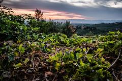Another Tuscany Sunset (Sö. La. Li.) Tags: italien sunset vacation italy nikon italia fotografie photographer outdoor kitlens lars tuscany foreground toskana 2015 sönke linnemann d5100 nikond5100 soenkelarslinnemann