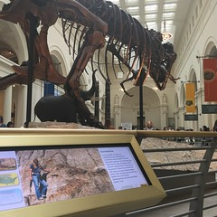 The Sue for whom the T rex is named (Tym) Tags: chicago museum skeleton fossil dinosaur fieldmuseum tyrannosaurusrex tyrannosaur fieldmuseumofnaturalhistory suethetrex