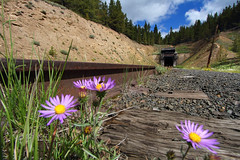 Silence at the summit (Moffat Road) Tags: railroad flowers ties colorado track rail tunnel co summit bore unused tennesseepass tunnelportal royalgorgeroute formerriogrande