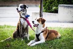 Amistad (camigomez35) Tags: perros animales amistad airelibre ciudaddelrio