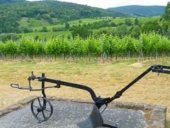 Vigneto con aratro (Django_ Reinhardt Walter) Tags: herbst vin landschaft vinho vino reben riesling wein weinberg trauben lese vigneto genuss pflug wingert weiswein