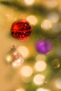 Jingle (Linford Hurst Photography) Tags: 1855mm canonrebelt3i chirstmasoranments christmas christmasdecorations dof efs1855mmf3556isii jingle linfordhurst other winter bell bokeh decorations depthoffield green jinglebell kitlens ornaments red