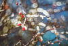 Trioplan Winter Series - 1 (Dhina A) Tags: sony a7rii ilce7rm2 a7r2 trioplan 100mm f28 meyeroptiktrioplan100mmf28 meyeroptik meyer optik 15blades prime m42 circlebokeh bokeh bubblebokeh crazy winter berries