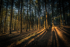 Between The Lines (Daniele Pauletto) Tags: woods bosco shadow me dpphotography trees nature pines