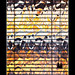 Untitled (Unintended_Keith) Tags: abstract window blind graffiti flames orange bright canon1dx sigma150600mms