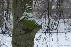 Die Nase im Wind ..... (Sockenhummel) Tags: baum tree winter schnee snow baumstamm park garten volkspark fenn fuji x30 fujifilm finepix fujix30 nase