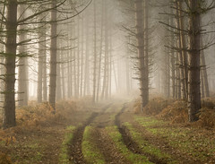 Enticing (jactoll) Tags: alcester coughton sambourne warwickshire coughtonparkwood woodland forest fog foggy mist misty track light landscape trees appicoftheweek sony a6000 zeiss 70200mmf4 jactoll