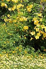 Longwood Gardens Summer  (49) (Framemaker 2014) Tags: longwood gardens kennett square pennsylvania united states america