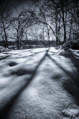 Season of long shadows (citrusjig) Tags: pentax kx infrared fullspectrum bw090redfilter blackandwhite toned trees manualfocus wisconsin winter sigma1020mmf456