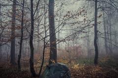 * (sedregh (off for some days)) Tags: nebel hilberath fog mist regen rain landschaft landscape eifel deutschland germany wald forest woods bäume trees