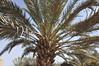 Projet Oasis Jorf, Maroc (CARI-association) Tags: oasis cari 2016 formation activité agroecologie développementdurable maroc