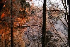 Sonnenuntergang in den weißen Bäumen
