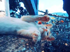 Cat 14 @specialcatsedition (Robert Krstevski) Tags: robertkrstevski robertkrstevskiblogspotcom cat cats catsphotography specialcatsedition catlovers catsedition pet pets petlovers gato gatos gata gatti кошка котка кошки котки la chatte kitty kitten kittens kitties cute cuteness мачка