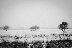snow tales #03 (C*D*F) Tags: neve fiocchi bianconero blackwhite snow snowflakes