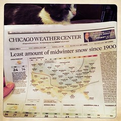 Winter Missing (swanksalot) Tags: weather chicago tampopo newspaper cat winter snow hipstamatic