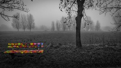 the colorful bench in black & white (Klaus Mokosch) Tags: colorkey colorful bench blackwhite monochrome mono landscape landschaft mist fog foggy hdr klausmokosch schwarzweiss