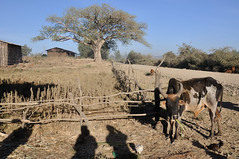 DSC_6219_00053 (giuseppe.cat75) Tags: ethiopia africa landscape bahirdar nikon village holidays 2017