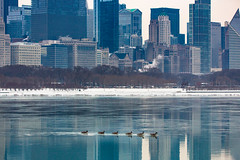 Morning Commute (Philocycler) Tags: canon chicagoist chicago chicagolakefront geese canadiangeese morningcommute lakeshoredrive snow water reflection canoneos5dmarkiii