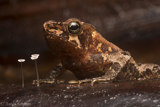 Toad and Fungi