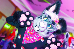 _MG_0726 (Tiger_Icecold) Tags: confuzzled cfz2016 cf2016 furcon furry convention fursuit birmingham party deaddog ddp deaddogparty