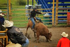 CalgaryPoliceRodeo2015-BullRiding-507 (calgarypolicerodeophotos) Tags: horse calgary race bareback sheep barrel police bull racing poker rodeo calf bullriding chute mutton saddle bronc steerwrestling barrelracing saddlebronc cpra chutedogging