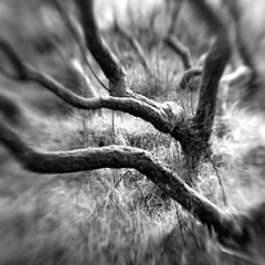Nether Wood 81 - Untitled (Adam Clutterbuck) Tags: wood uk greatbritain england blackandwhite bw tree monochrome lensbaby square landscape mono blackwhite unitedkingdom britain somerset bn elements gb bandw sq mendips charterhouse undergrowth nether greengage netherwood adamclutterbuck sqbw bwsq showinrecentset