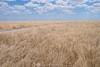 grassland dreaming (Sun Spiral) Tags: australia outback grasslands barkly cattlestation sturtplains