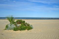 Montesilvano - mare d'autunno (boscam) Tags: autumn sea beach mediterraneo italia mare autunno spiaggia abruzzo adriatico montesilvano