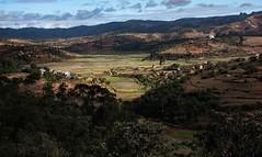 Rice Bowl, Madagascar (Rod Waddington) Tags: africa rural landscape countryside village rice african bowl afrika agriculture madagascar irrigation paddies afrique malagasy