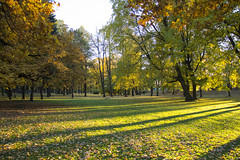 Golden park (Una S) Tags: park trees light fall leaves yellow golden afternoon latvia falling riga latvija viesturdrzs
