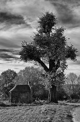 Marienkapelle (efgepe) Tags: november bw holland tree netherlands blackwhite well sw nik maas schwarzweiss baum limburg niederlande lightroom 2015 marienkapelle maasduinen silverefexpro mariakapelletje