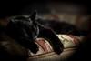 sleep (^Baobab^) Tags: canon blackcat sleep sony alpha bestofcats ef85mmf12lii a7rii ilce7rm2