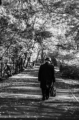 Alley (mateusz.paulus) Tags: park old autumn trees tree leaf bush alley poland leafs evanescence