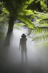The Mist-ery Girl (Julian Teh) Tags: mist fern forest rainforest canberra botanicalgarden australiancapitalterritory australiannationalbotanicgardens canon1740mm canon7d