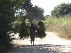 """Bagan: en chemin entre 2 pagodes <a style=""""margin-left:10px; font-size:0.8em;"""" href=""""http://www.flickr.com/photos/127723101@N04/22814044903/"""" target=""""_blank"""">@flickr</a>"""