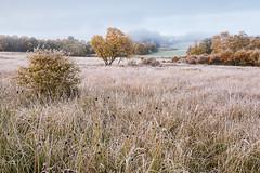 Autumn Grasses and a Distant House (Geoff France) Tags: mist tree field landscape scotland estate scottishlandscape revak revakestate