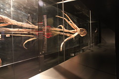 Science World - October 15, 2015 (rieserrano) Tags: squid bodyworlds giantsquid plastination