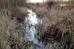 DSCF7396.tif (Ad Sebregts) Tags: plant river margriet