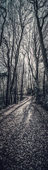 """fine art B&W path around the corner through the trees, Bois de Breuil (Breuil forest) near Honfleur, Calvados, Normandy, France (grumpybaldprof) Tags: honfleur normandy normandie france calvados """"boisdubreuil"""" """"forestofbreuil"""" vasouy penndepie conservation """"conservatoiredulittoral"""" rhododendrons """"coastalconservancy"""" bois forest trees deciduous coniferous wood woods coastline """"dukesofnormandy"""" french kings """"philippeauguste"""" breuil wildlife wildboar """"pinemarten"""" """"redfox"""" deer """"forestwalk"""" landscape branches leaves noiretblanc blackandwhite blackwhite bw monochrome path corner tall shadow light patterns texture stack panorama verticalpanorama detail contrast moody atmosphere winter sun sunlight sky tamron 16300 16300mm """"tamron16300mmf3563diiivcpzdb016"""""""