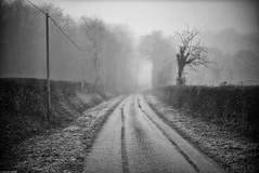 89520 (Mathieu HENON) Tags: leica noctilux m240 50mm noirblanc blackwhite france bourgogne route hiver