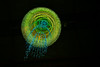 like a firework (Toni_V) Tags: m2402721 rangefinder messsucher leicam leica mp typ240 35lux 35mmf14asphfle summiluxm hauptbahnhof mainstation zurich zürich installation lamps lampen led leuchter kronleuchter aroma station switzerland schweiz suisse svizzera svizra europe ©toniv 2016 161231 dof bokeh