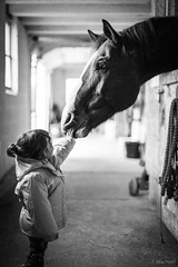 Touching Fred (Jen MacNeill) Tags: horse horses equine bw blackandwhite child toddler girl love pet animal tender caring hand tiny quarterhorse barn stable