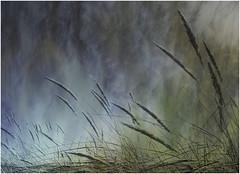 Textured Nature (kurtwolf303) Tags: nature natur gras grass textur texture olympusem1 omd grashalme bladesofgrass microfourthirds micro43 ebenen systemcamera mirrorlesscamera unlimitedphotos topf25 250v10f topf50 kurtwolf303 500v20f topf75 flickrelite topf100 900views 1000v40f topf150 1500v60f