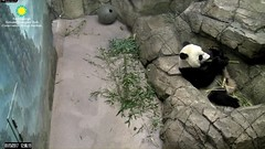 2017_01-15e (gkoo19681) Tags: beibei bootime soproud stealing feetsies footaction bigboyboo fuzzywuzzy cubisgrowingup ccncby nationalzoo