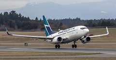 YYJ West Jet (Paul Rioux) Tags: victoriainternationalairport cyyj yyj westjet boeing 737 aircraft airplane airliner vehicle transportation takeoff lift rotate sidney bc prioux jet
