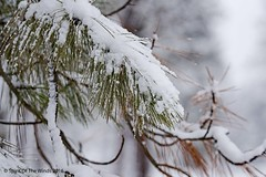 "Twas a Fine Winter Day (jimgspokane) Tags: winter turnbullwildliferefuge snow washingtonstate otw ""nikonflickraward"""