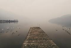 Misty (Alessio Bertolone) Tags: water acqua lago lake lagodicaldonazzo misty nebbia fog surreale surreal trentino italia italy gabbiani pontile molo atmosfera atmosphere nebbioso mountains montagne