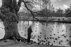 Lonely days are hard to get through fast (OR_U) Tags: 2017 oru uk richmondpark richmond bw blackandwhite blackwhite schwarzweiss monochrome feeding birdfeeding old lonely water lake tree birds