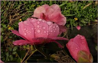 Refreshing rain !!