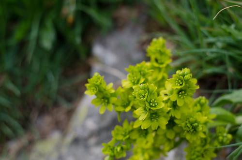 Small plants - so charming ©  Still ePsiLoN
